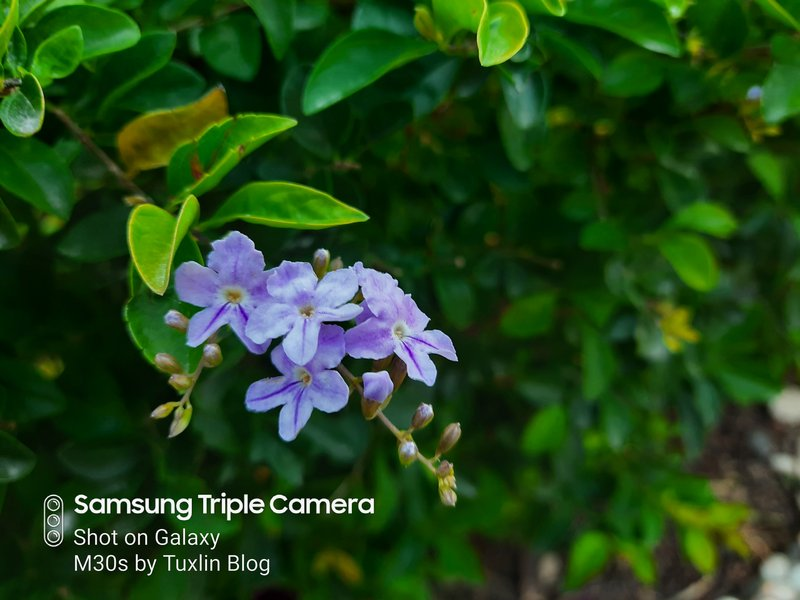 Review Kamera Samsung Galaxy M30s Berkekuatan 48MP! 21