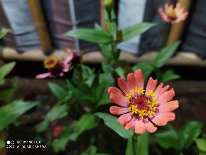 Review Kamera Xiaomi Redmi Note 8: Lebih Bagus dari Redmi Note 7? 19