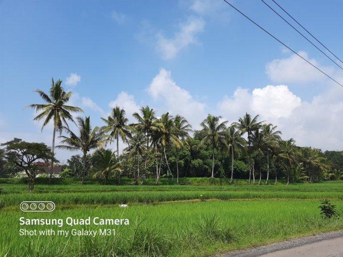 Membeli dan Menjajal Samsung Galaxy M31 di Tengah Wabah Covid-19 5