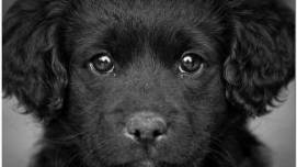 štene pas lutalica