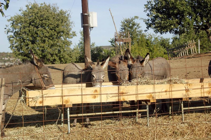 Vruće crne magarca slike