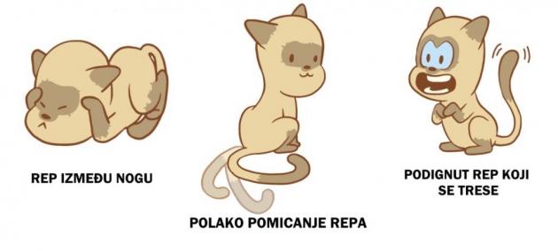 Slike velikog plijena i maca
