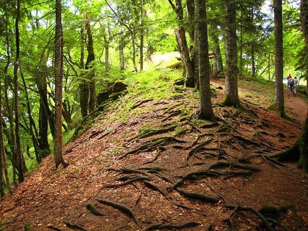 Perucica-prašuma