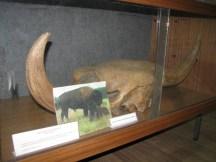 muzej-istocne-bosne (3)