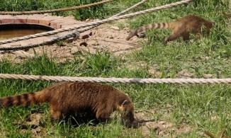 zoo-park-tuzla (3)