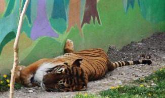 zoo-park-tuzla (5)