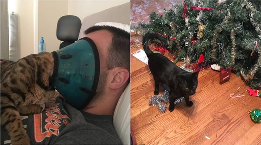 Fotografije čiste mačke