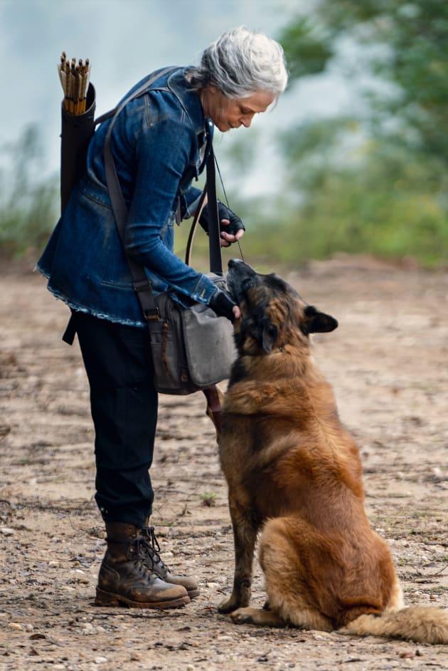 The Walking Dead Saison 10 Stream : walking, saison, stream, Watch, Walking, Online:, Season, Episode, Fanatic