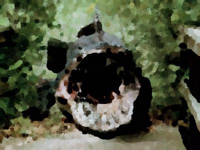 『殺人魚獣ヘビッシュ』(B級映画 2014年) エイラ・ケル,デイブ・デイビス出演