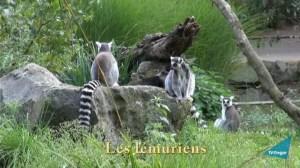 2014-10-zoo-tregomeur-vign3m