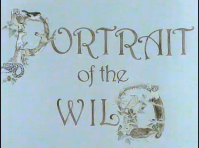Portrait of the Wild