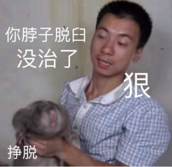 竹鼠表情包 - 竹鼠微信表情包 - 竹鼠QQ表情包 - DIY斗圖 diydoutu.com
