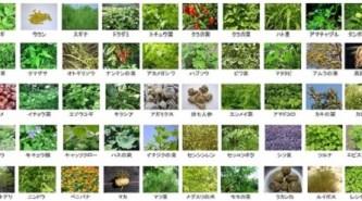 酵素八十八選は88種類の野草を中心にした酵素飲料