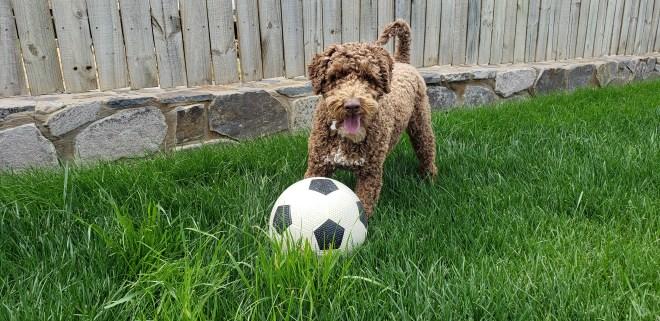 Hershey the Dog