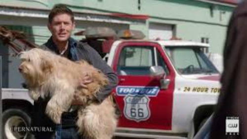 Supernatural season 15 episode 19 Dean with Dog