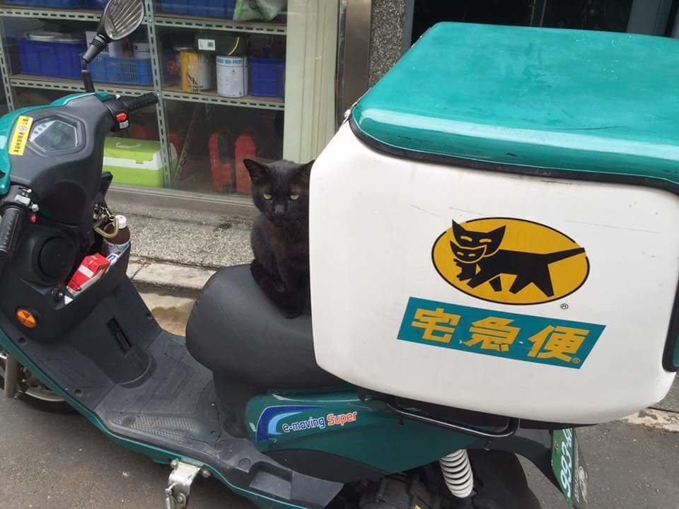 【搵食艱難】成功捕捉黑貓去宅急便見工嘅一刻! - 毛記電視