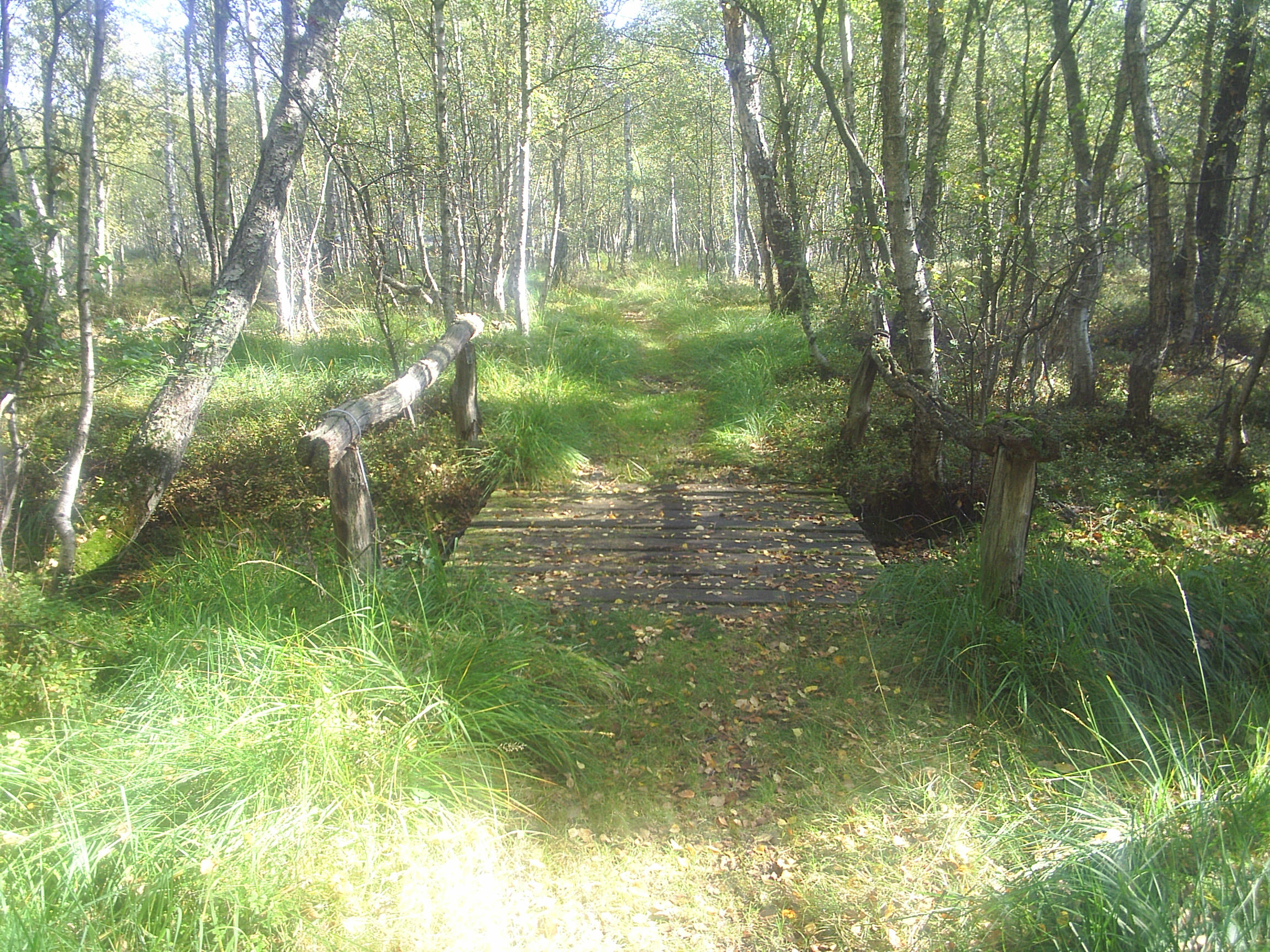 Small bridge in the boggy ground