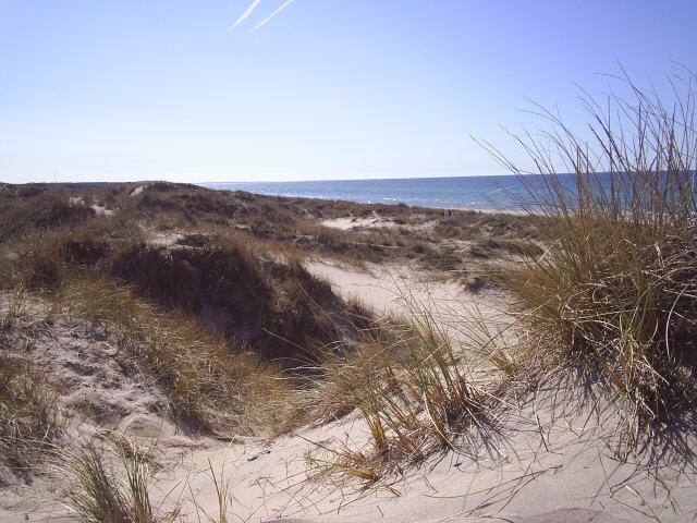 Tisvilde Hegn. Staengehus. The dunes. Photo in direction Liseleje. 18. april 2009