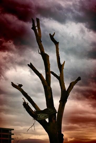 Not much left to a tree after tornado tore through Joplin, MO
