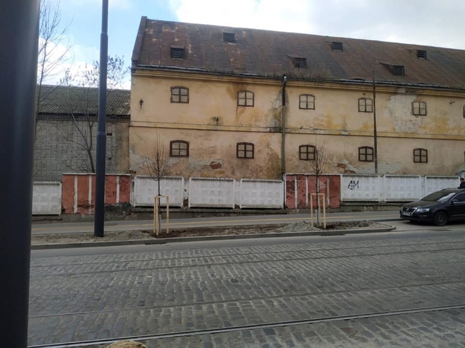 На вулиці Шевченка у Львові висадили понад 30 лип