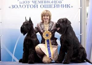 Золотой-ошейник-3