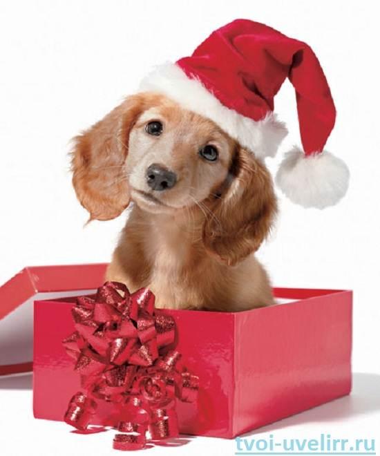 Идеи-новогодних-подарков-9