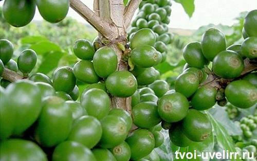 Вся-правда-о-зелёном-кофе-Зеленое-кофе-для-похудения-4