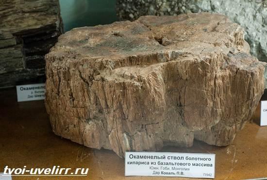 Что-такое-окаменелое-дерево-Свойства-добыча-применение-и-цена-окаменелого-дерева-5