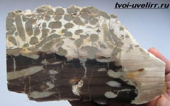 Что-такое-окаменелое-дерево-Свойства-добыча-применение-и-цена-окаменелого-дерева-6