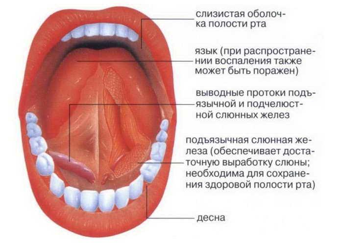 Воспалилась железа под языком