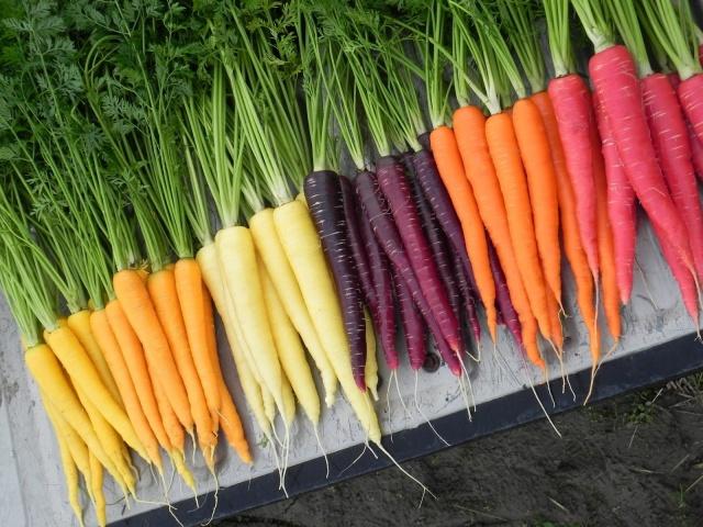 Морковь польза и вред для организма человека сколько нужно съесть для чего полезна