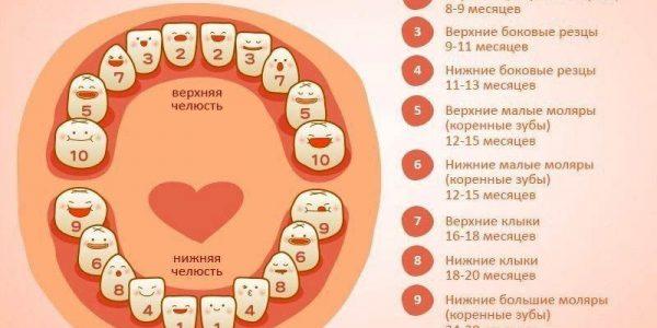 Подробное фото, которое продемонстрирует вам схему прорезания зубов у детей из таблице выше.