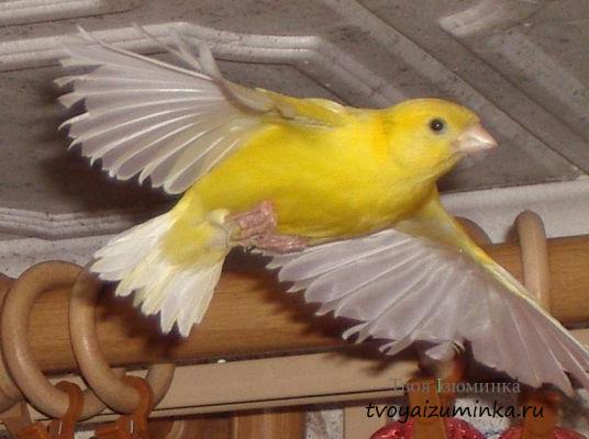 câștiguri pe internet păsări)