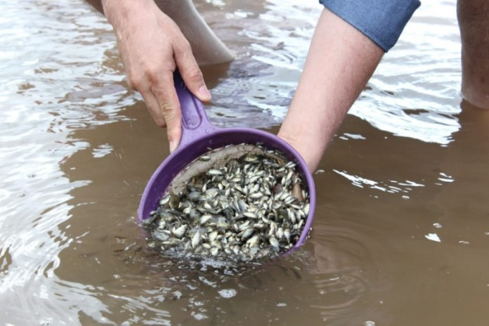 State Government has delivered 15 million Tilapia Fry