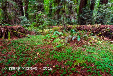 Forest floor growth