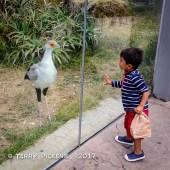 One big bird