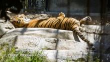 Zoo-44
