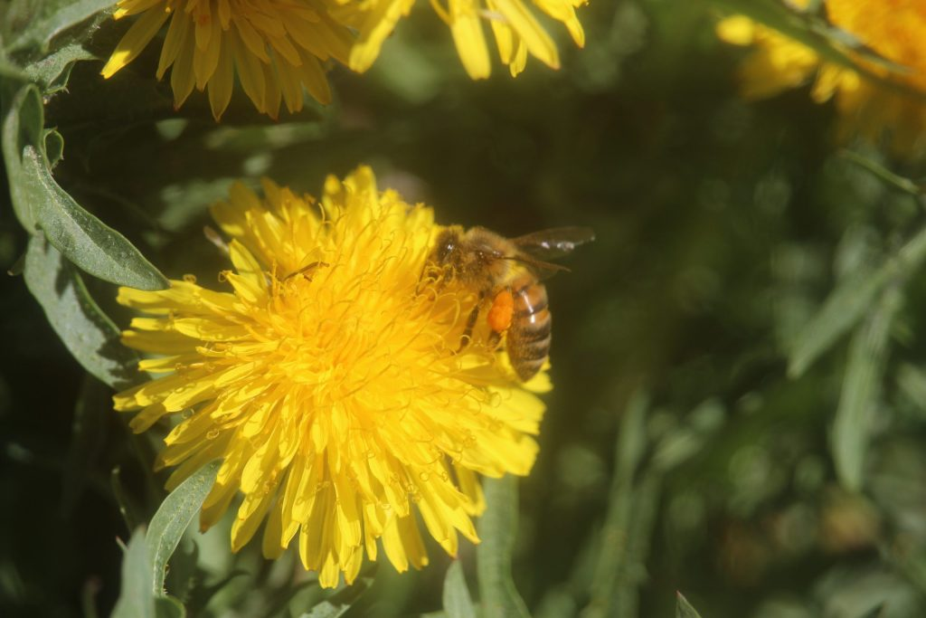 honeybees - all abuzz