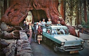 driving through giant redwood