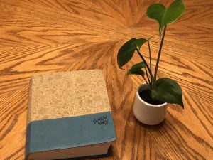 bible and plant at desk