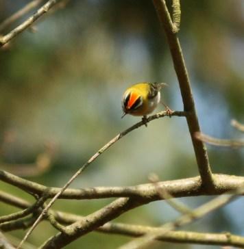 Zniczek-prezent na święta dla naszych widzów i czytelników, szczególnie tych co kochają przyrodę.