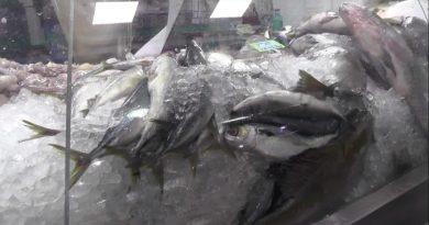 Procura por peixes aumenta durante a Semana Santa