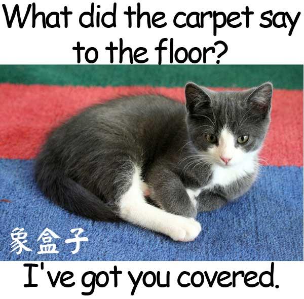 capet floor 地毯 地板 have got you covered 我會為你代勞 我幫你搞定
