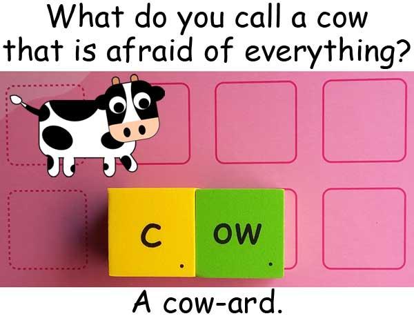 cow 母牛 奶牛 coward 膽小鬼