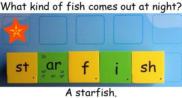 starfish 海星