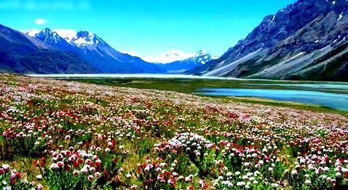 西藏林芝旅遊 - 圖集:林芝-高原江南春色無邊 - 美景旅遊網
