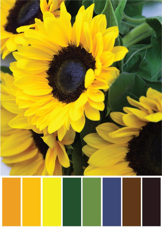 Orange Farbpalette - Sonnenblumen - Tweed & Greet