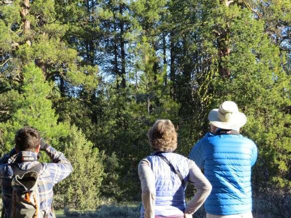 Forest-birding, Idlewild Campground