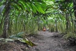 Spice Plantation Walk