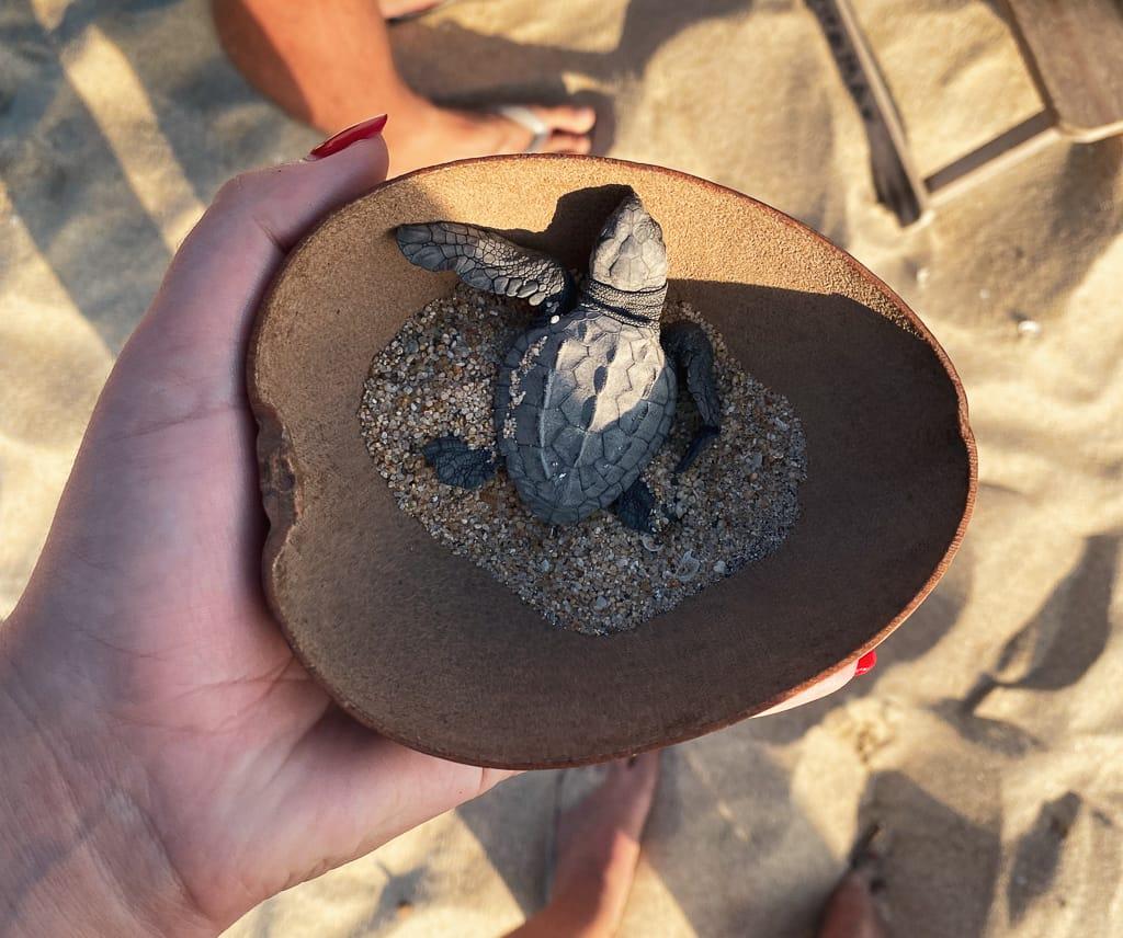 bebe tortue puerto escondido